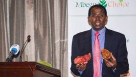 New online tool for seed selection in Kenya