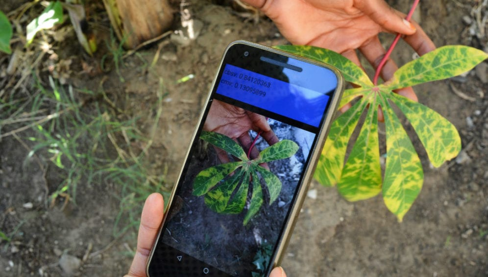 New mobile app diagnoses crop disease in the field