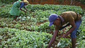 Geospatial tech could boost Africa's agricultural sector
