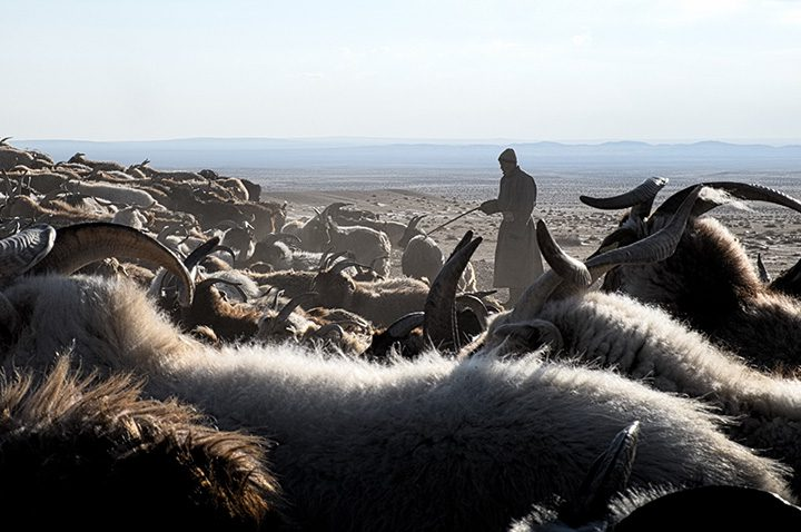 Sheep and goats in the Gobi Desert. As with seaweed and fish in Madagascar, these products are crucial for the local economyin the arid highlands of Mongolia. The community has created a fund that compensates individual households in case of severe herd loss due to extreme weather events.