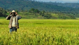 Burundi's agriculture sector taps into Belgian funds