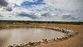 Africa feels the negative impacts of climate change