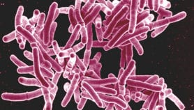 Tuberculosis: Facts & figures