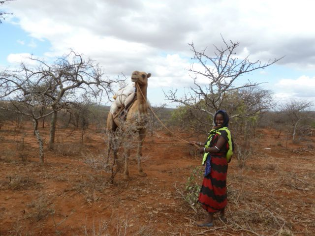 woman and her camel
