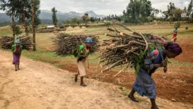 Fuelwood sellers '145 per cent likely to plant trees'