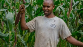 Africa Analysis: Climate change is smallholders' pain