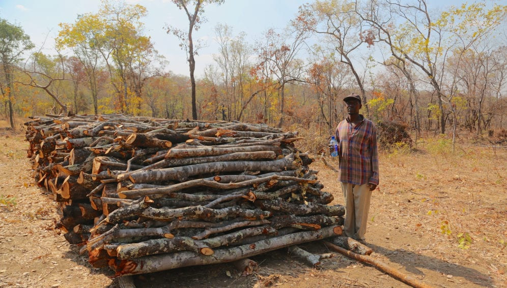 A charcoal producer, standing beside a pile of wood that ready to be burned into charcoal