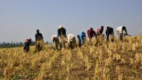 Africa's smallholders to bear the brunt of COVID-19