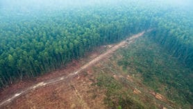 Global forest restoration hotspots identified