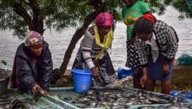 Using internet technology to improve cage fish farming