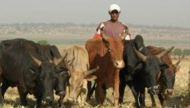 Farmer-herdsmen conflicts linked to climate change