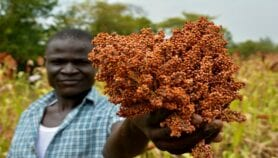 AgriAfrica: Toxins threaten food safety