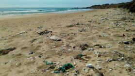The plastic waste fuelling fungal diseases