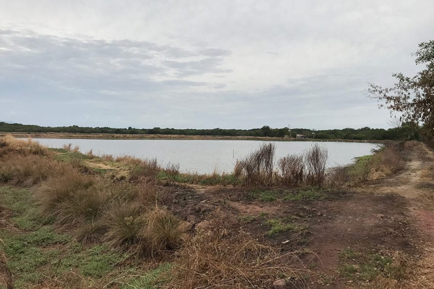 """A privately owned shrimp aquaculture operation separated by their women's fishing area by a thin stretch of mangrove. """"They don't give us access [to fishing areas],"""" says Rosa Bustos. The women say the outfit pollutes the waters, and removing the mangrove has reduced their fishing area."""